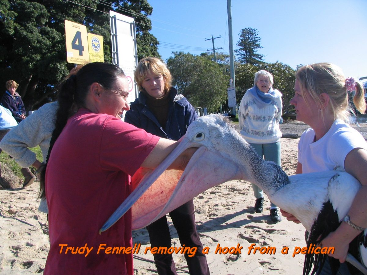 Trudy removing hook from pelican