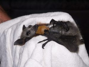 What we do - saving a bat